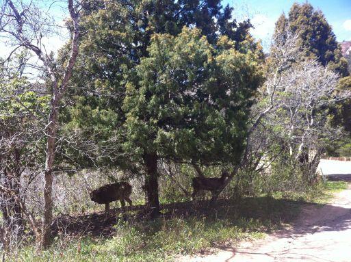 deer spotting2