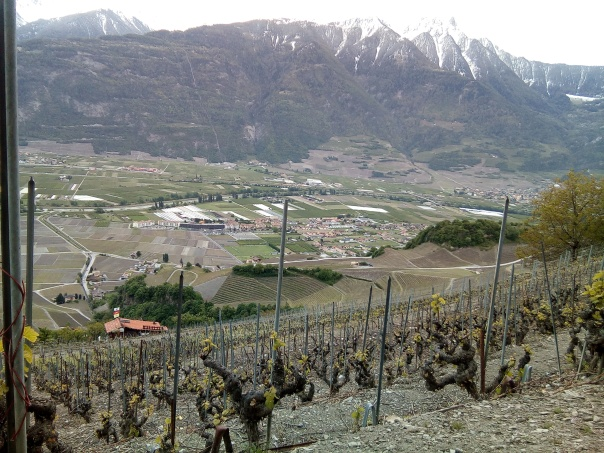 ovronnaz mountainside vineyard
